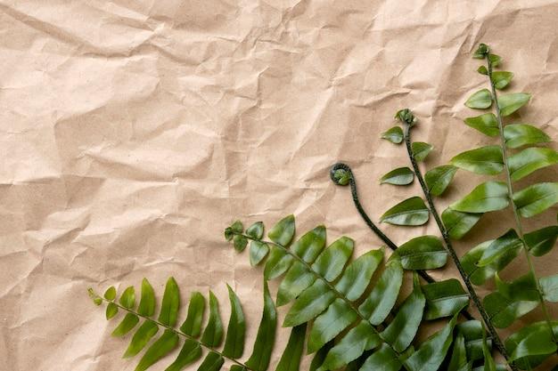 Układ zielonych liści z miejsca na kopię