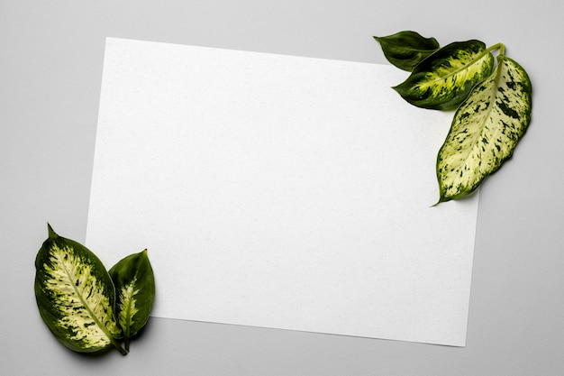 Układ zielonych liści z pustą kartą