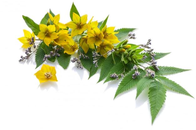 Układ żółte kwiaty na białym tle.