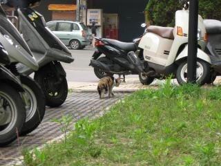 Ukradkiem kota