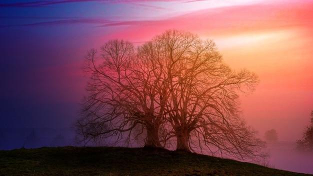 Ukrywanie drzewa