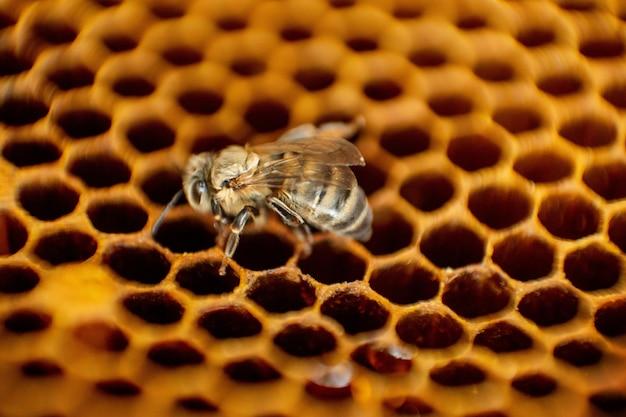 Ula na plaster miodu z copyspace. pszczoły produkują świeży, zdrowy miód. koncepcja pszczelarstwa