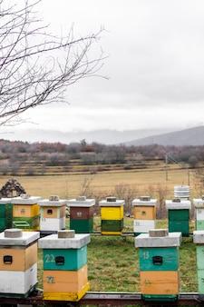 Ule pszczół na świeżym powietrzu na wsi