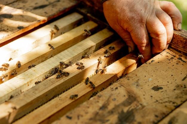 Ule pszczół pod opieką pszczół o strukturze plastra miodu i pszczół miodnych. pszczelarz otworzył ul, aby ustawić pustą ramę z woskiem do zbioru miodu