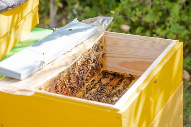 Ule w opiece nad pszczołami o strukturze plastra miodu i pszczołami miodnymi. pszczelarz otworzył ul, aby ustawić pustą ramkę