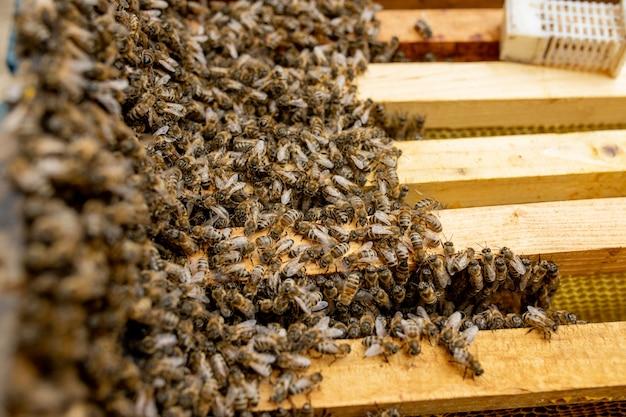 Ule w opiece nad pszczołami o strukturze plastra miodu i pszczołami miodnymi.