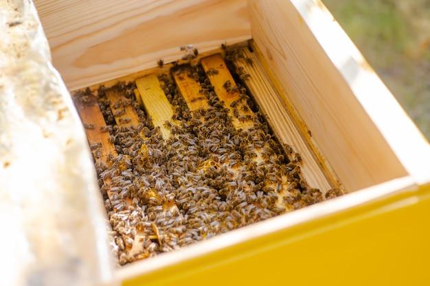 Ule w opiece nad pszczołami o strukturze plastra miodu i pszczołami miodnymi