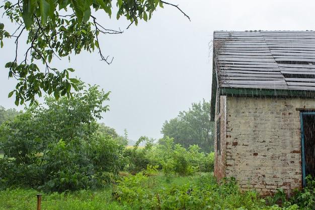 Ulewny deszcz w pobliżu starego opuszczonego domu w odległej wiosce. zielona natura.
