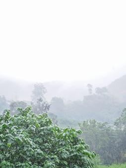 Ulewny deszcz w tropikalnym zielonym lesie