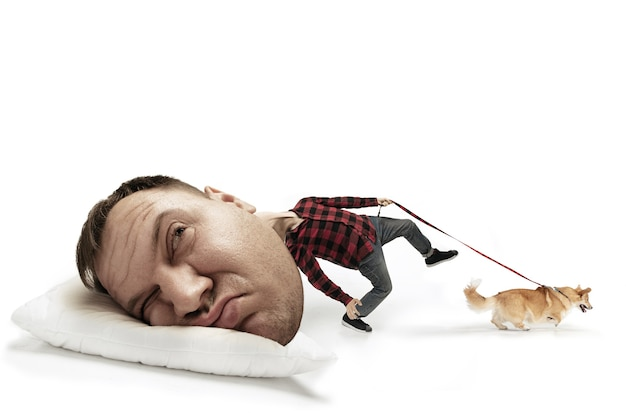 Ulica woła, biegnijmy. duża głowa na małym ciele leżącym na poduszce. człowiek z małym corgi nie może się obudzić, bo boli go głowa i zaspał. pojęcie zatrudnienia, pośpiech, terminy, zawroty głowy.