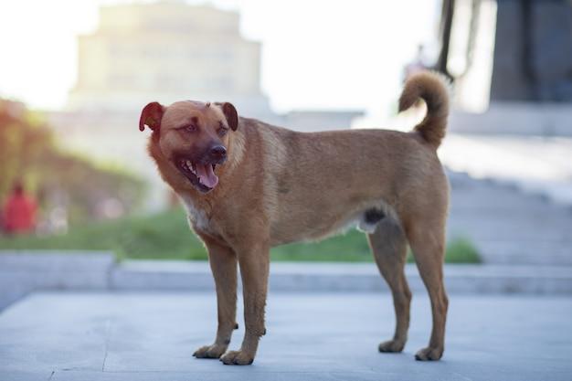 Uliczny brązowy pies na ulicy