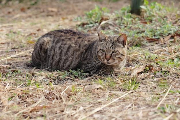 Uliczny kot kuca na bocznej ulicie w parku.