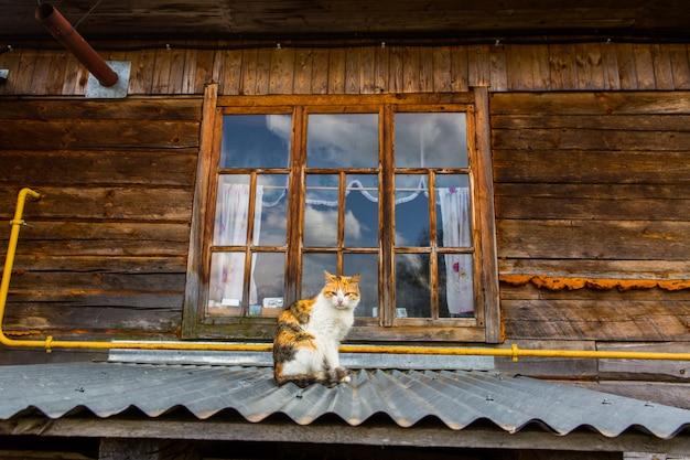 Uliczny kot na dachu w wiosce