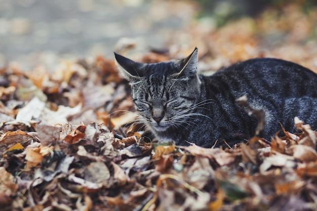 Uliczny kot śpi