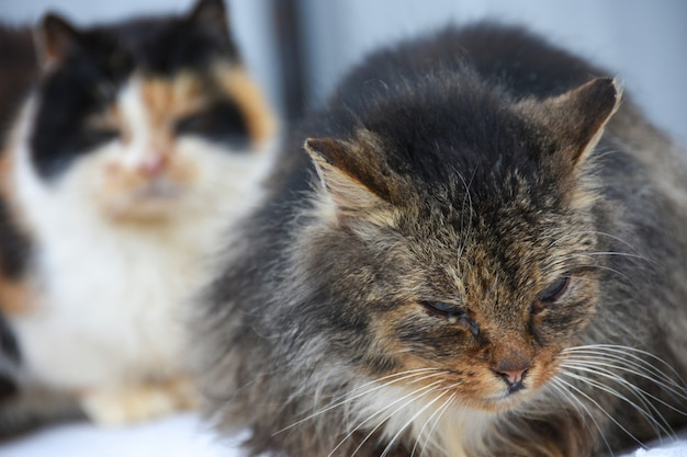 Uliczny kot z bolesnymi oczami siedzi na ulicie