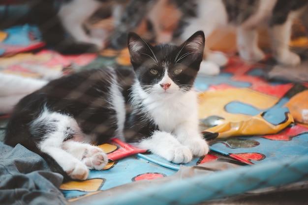 Uliczny uroczy kotek na wypadek adopcji