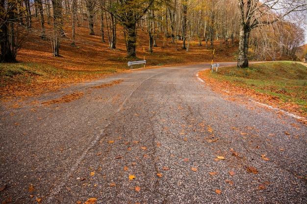 Ulistnienie w monti simbruini parku narodowym, lazio, włochy. droga przez las. jesienne kolory w buku. buk z żółtymi liśćmi.