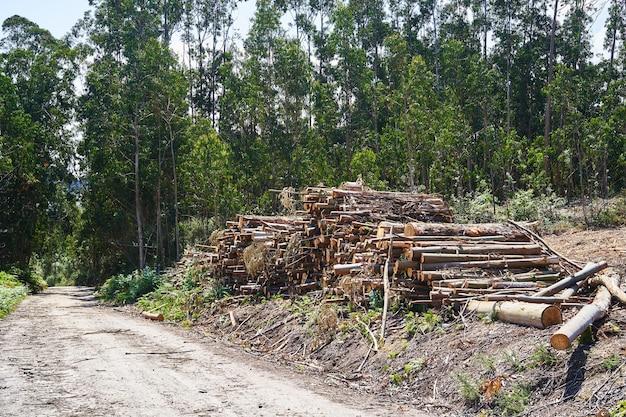 Ułożone kłody cięte w lesie. koncepcja wylesiania.