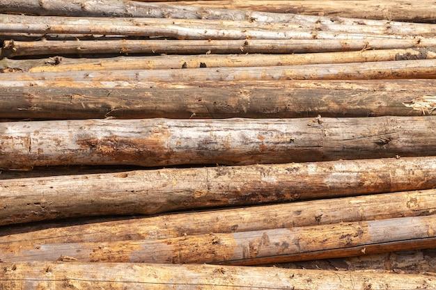 Ułożone pnie drzew ścięte w sosnowym lesie