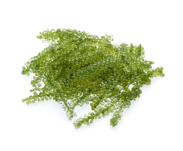 Umi-budou, wodorosty winogron lub zielony kawior na białym tle