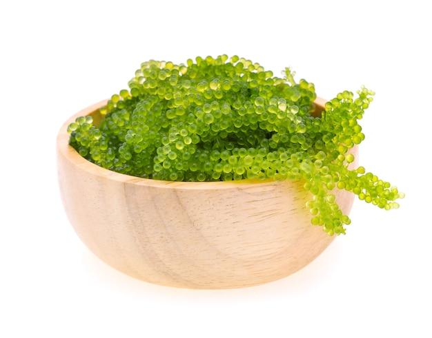 Umi-budou, wodorosty winogronowe lub zielony kawior na białym tle