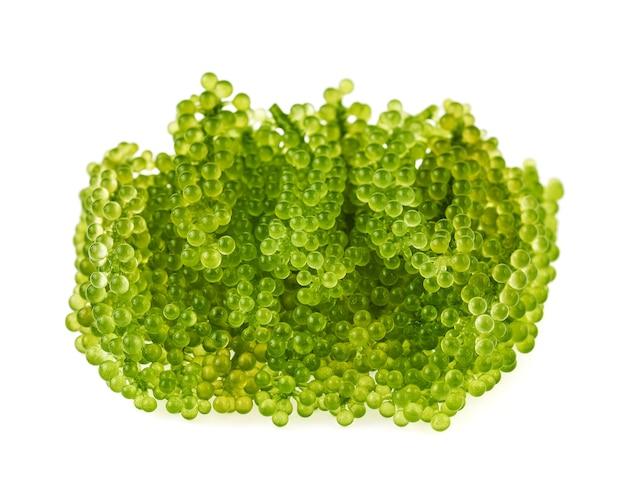 Umibudou, wodorosty winogronowe lub zielony kawior na białym tle