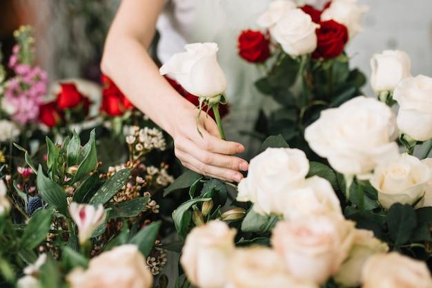 Upraw kwiaciarni zrywanie wzrastał dla bukieta