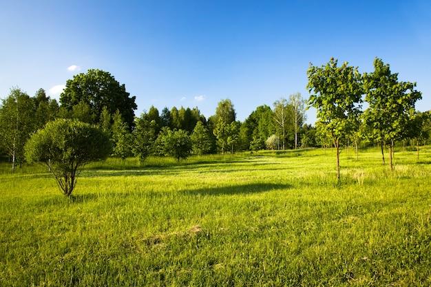 Uprawa drzew latem.