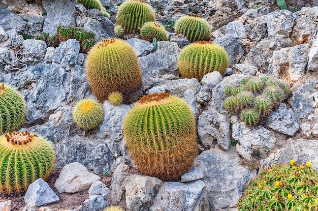 Uprawa kaktusów i sukulentów w ogrodzie botanicznym