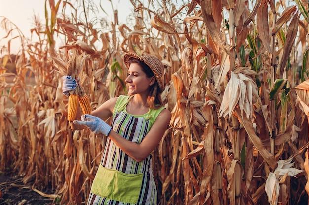 Uprawa kukurydzy młoda kobieta rolnik sprawdza żniwa kukurydzanego i podnosi. pracownik trzyma jesień kaczany kukurydzy. prace ogrodowe