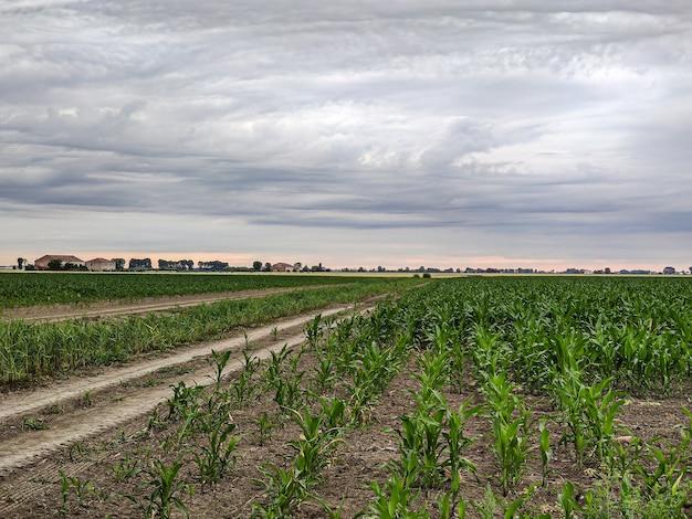 Uprawa kukurydzy we włoszech pod burzliwym niebem na wiosnę