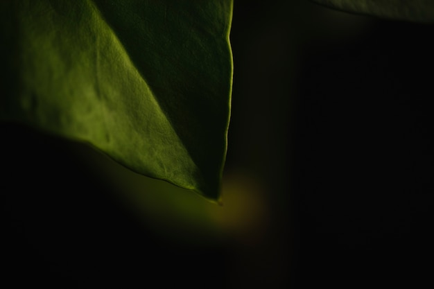 Uprawa liść na ciemnym tle