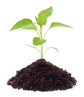 Uprawa nowych małych roślin na białym tle