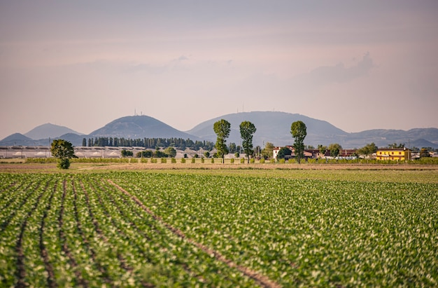 Uprawa polowa w północnych włoszech w villanova del ghebbo