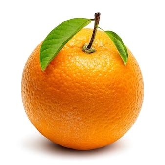Uprawa pomarańczy na białym tle