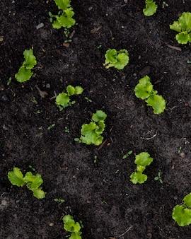 Uprawiaj sezonowe warzywa i owoce, podlewaj i przesadzaj rośliny i drzewa warzywa