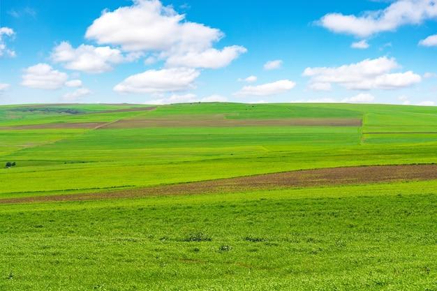 Uprawiane zielone pola uprawne z błękitnym niebem i chmurami