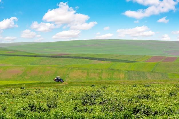 Uprawiane zielone pola uprawne z niebieskim niebem i chmurami