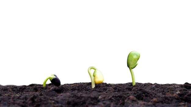 Uprawy i uprawy w żyznej glebie na białym tle przycinanie i koncepcje inwestycyjne dla rolników.