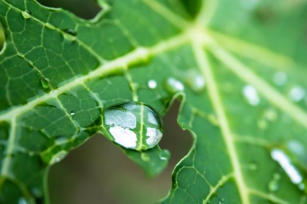 Upuść na zielony liść