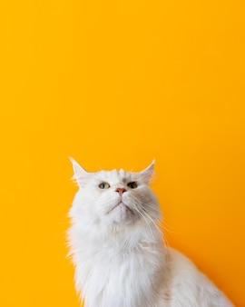 Urocza biała koteczka z monochromatyczną ścianą za nią