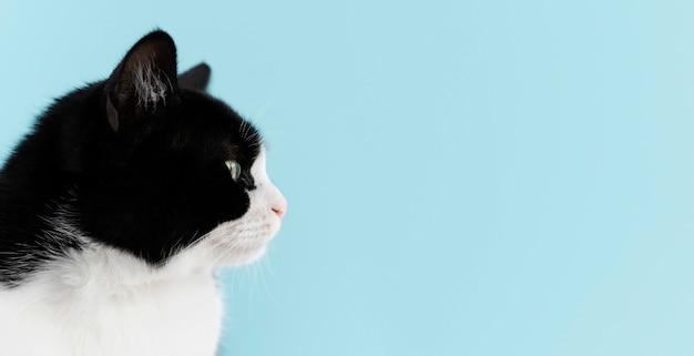 Urocza biało-czarna koteczka z monochromatyczną ścianą za nią