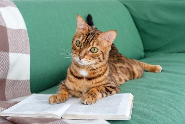 Urocza kotka bengalska leży na kanapie z otwartą książką