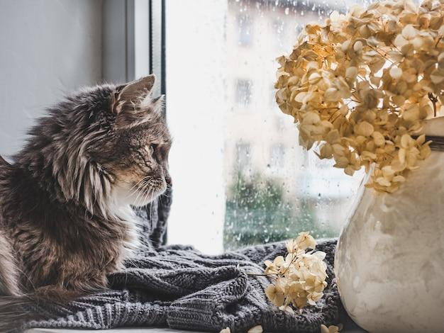 Urocza kotka i dzbanek z pięknymi, białymi kwiatami