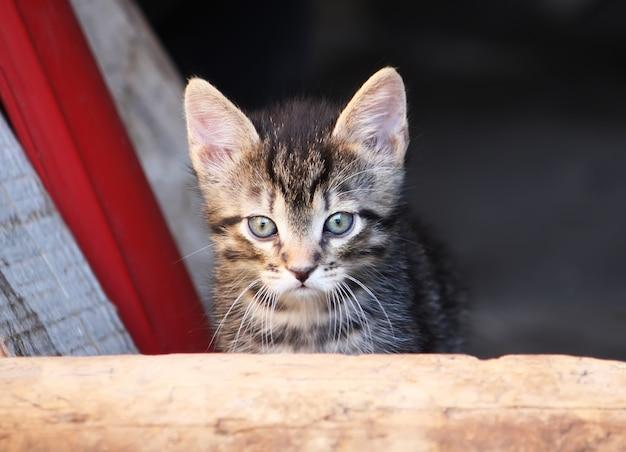 Urocza kotka na zewnątrz