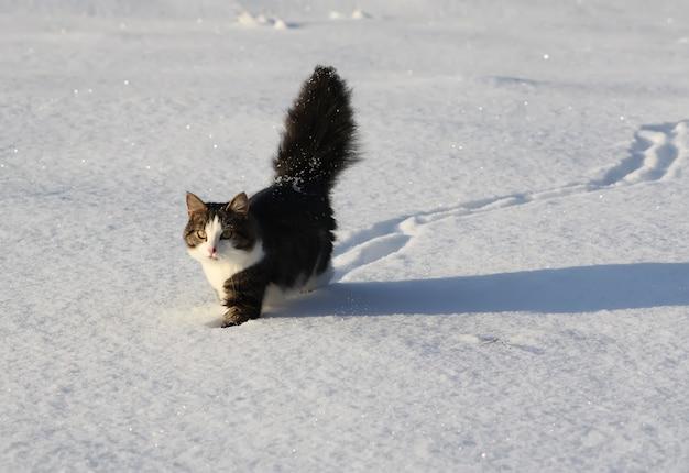 Urocza młoda kotka z puszystym ogonem na śnieżnym polu w zimie