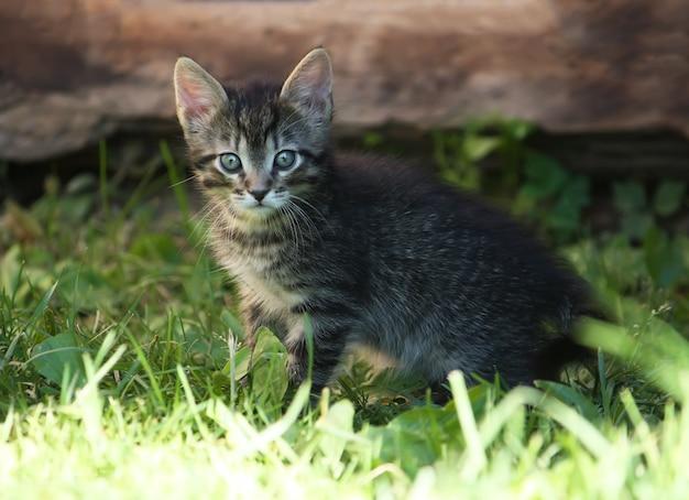 Urocza szara kotka w paski w słońcu bawiąca się na zielonej trawie na zewnątrz