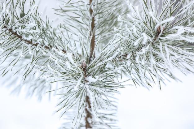 Urocze zamarznięte gałęzie na rozmytym zimowym tle