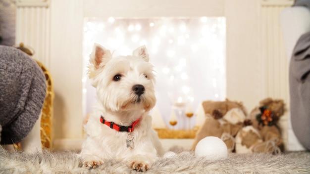 Uroczy biały pies w świątecznym wnętrzu