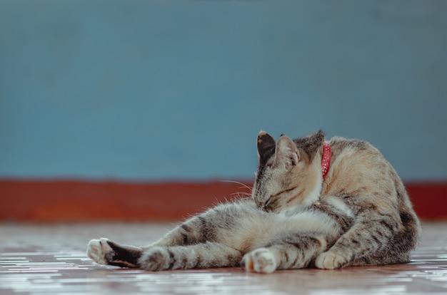 Uroczy brązowy kot domowy siedzi samotnie i czyści swoje ciało